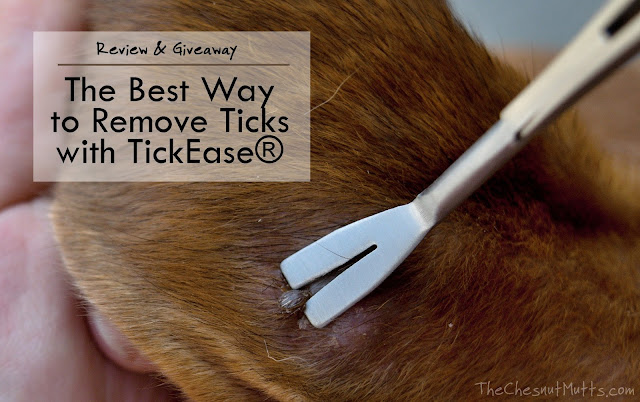Review & Giveaway: The Best Way to Remove Ticks with TickEase®