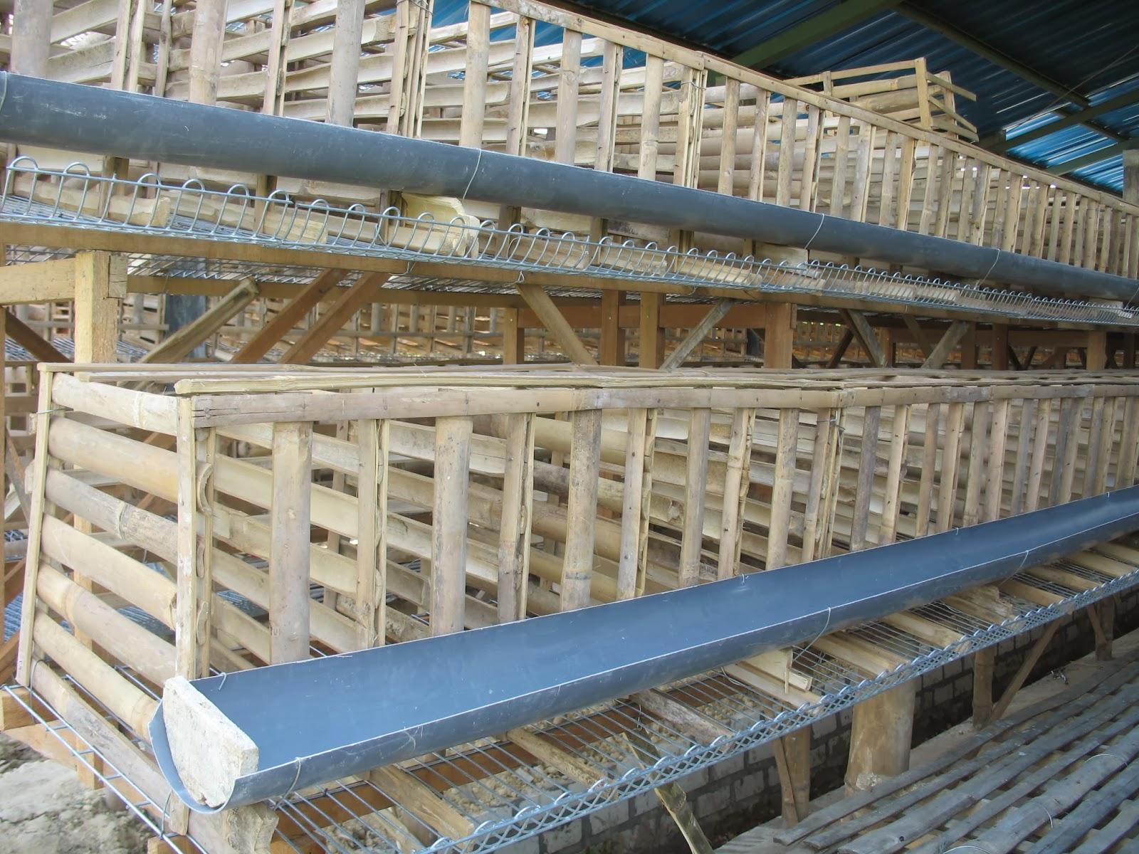 Kandang Ayam Petelur (Baterai): Baterai Modif dari bambu ...