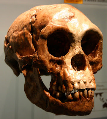 "Ancient Indonesian ""hobbit"" looked more human than ape"