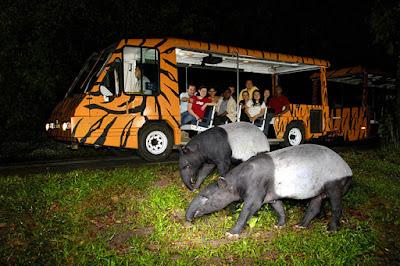 Night Safari Tour - trips Wheel Pvt Ltd