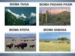 contoh struktur organisasi tingkat bioma