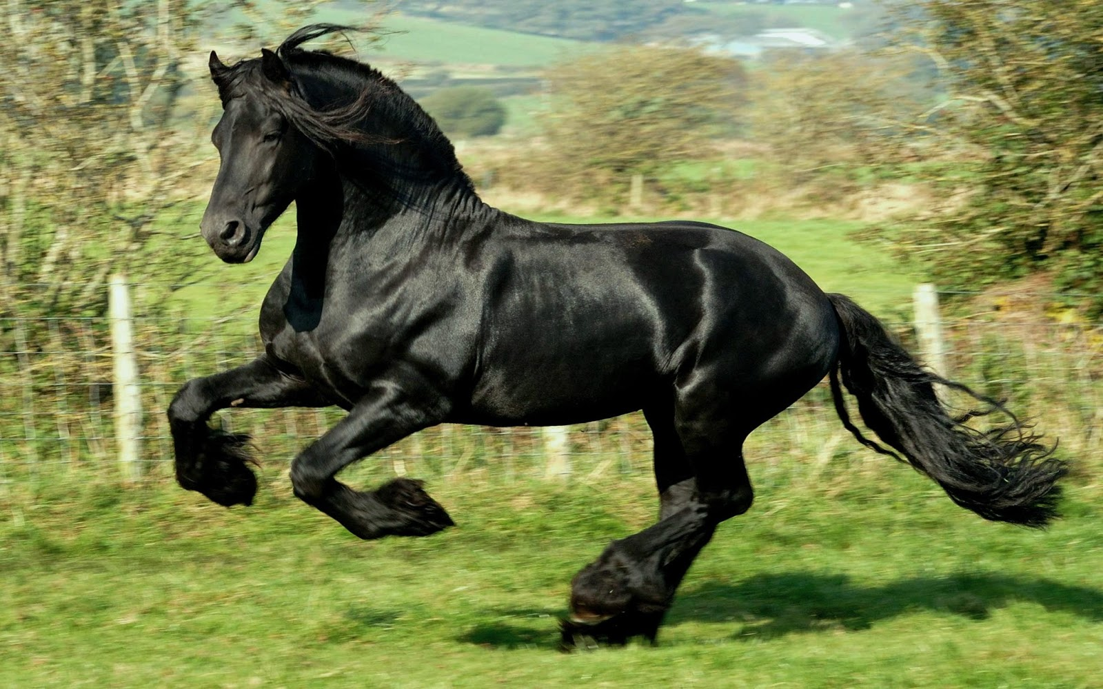 Running Black Horse Wallpapers