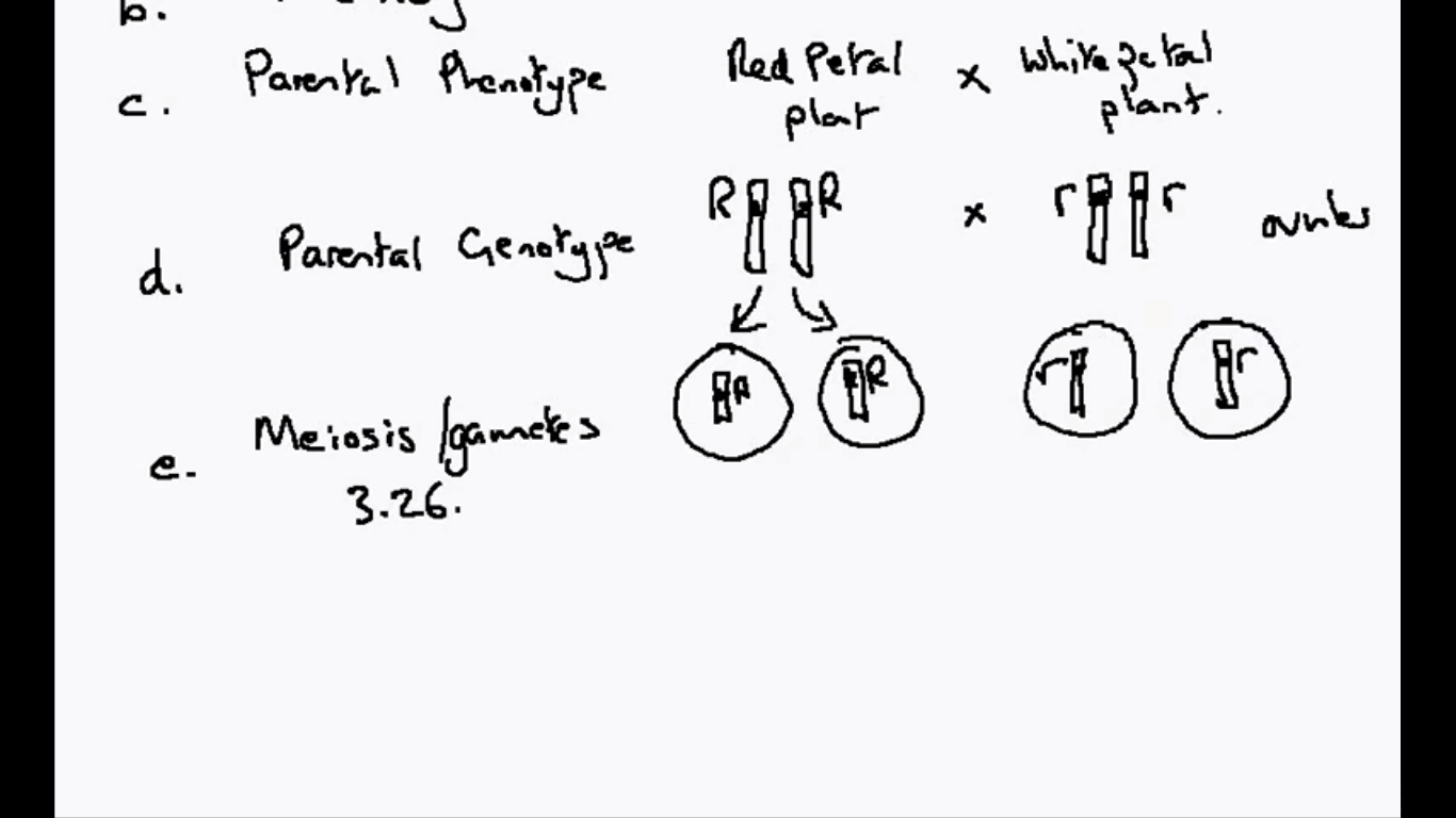 Andrew Biology: P1 x P1 Cross