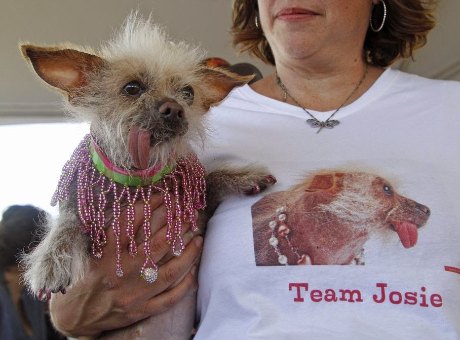 Josie, a Chinese Crested from Tucson, Arizona, waits before the start of the World's Ugliest Dog Contest, at the Sonoma-Marin Fair, Friday, June 20, 2014, in Petaluma, Calif.