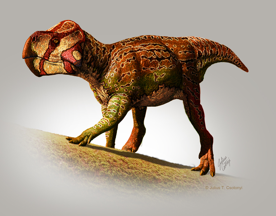 Scientists name two new species of horned dinosaur - The ...
