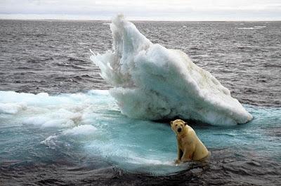 Beruang kutub. Sumber foto: trbimg.com