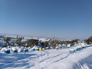 Χιονισμένα μελίσσια στην ορεινή Χαλκιδική