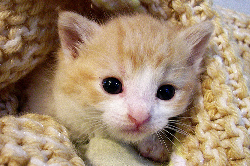 My Top Collection: Cute pics of cats