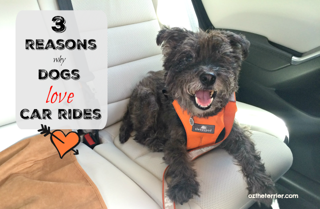 3 reasons why dogs love car rides #besleepypodsafe