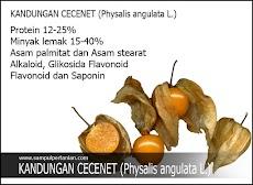 Kandungan Cecenet atau Ciplukan (Physalis angulata L.) yang bermanfaat bagi tubuh kita