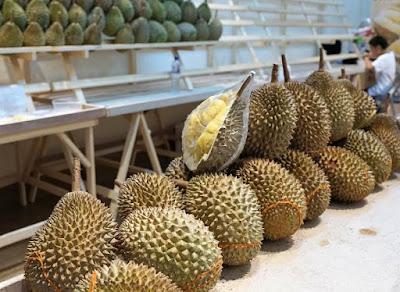 10 Manfaat Dan Khasiat Durian Mentah Untuk Kesehatan