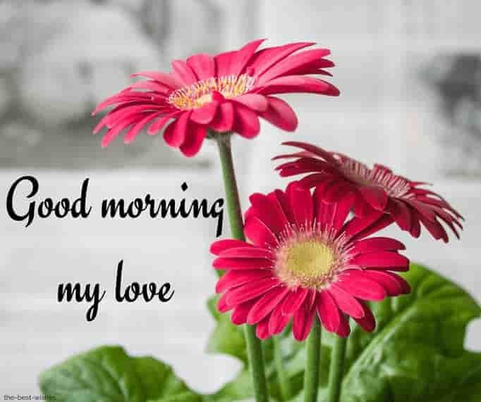 good morning my love with flowers