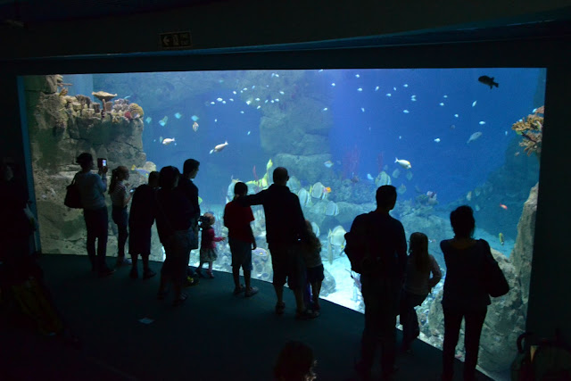 Visitors standing in front of the Great Barrier Reef tank at the National Marine Aquarium in Plymouth