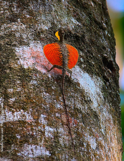 Wildlife watching in North Sulawesi
