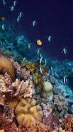 Gugusan Taman Kepulauan Wakatobi