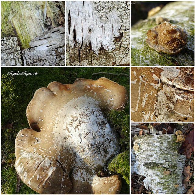 textures of bark and fungus by AppleApricot