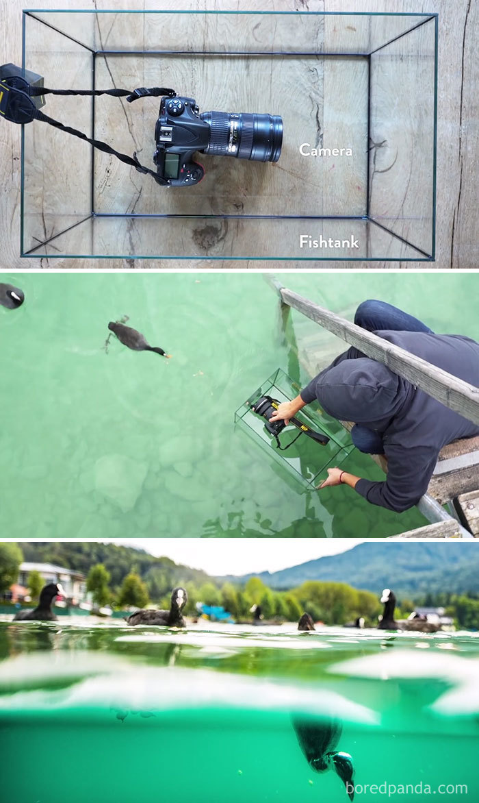 #2 Use A Fishtank To Get That Underwater Shot - 10 Genius Camera Hacks That Will Greatly Improve Your Photography Skills In Less Than 3 Minutes