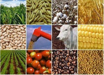 O aspecto estratégico, político e econômico do Agronegócio