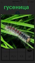 460 слов 4 ползет гусеница по траве 17 уровень