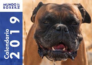 Calendario MundoBoxer 2019