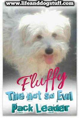 Fluffy the Not So Evil Pack Leader.