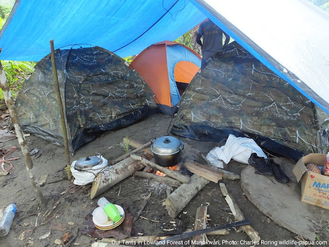Camping in the forest of Manokwari with Charles Roring