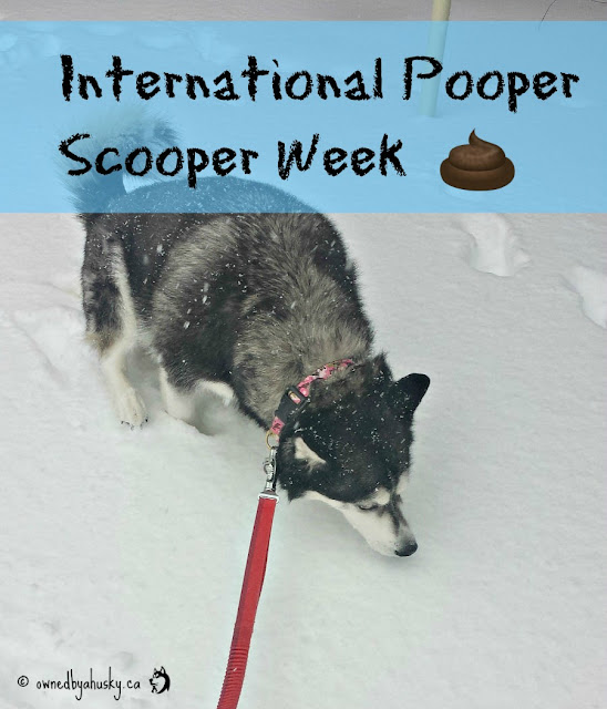 International Pooper Scooper Week