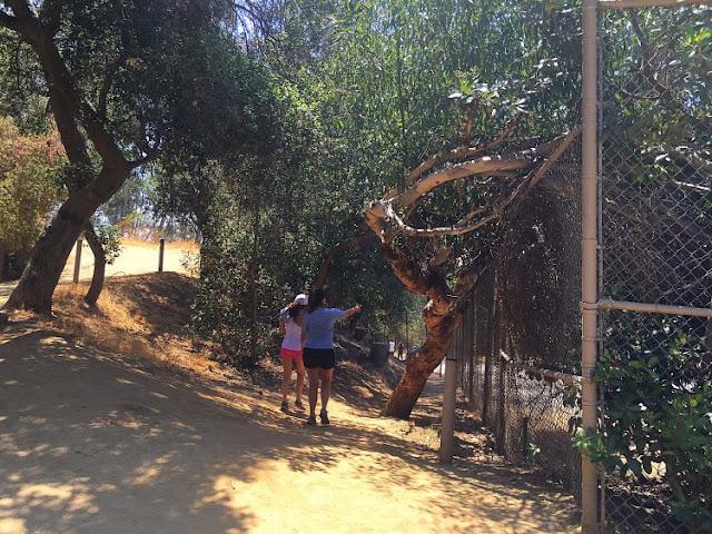 Dicas sobre o Zoológico de Los Angeles