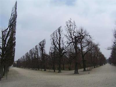 Pohon-pohon ini memang sengaja dipangkas