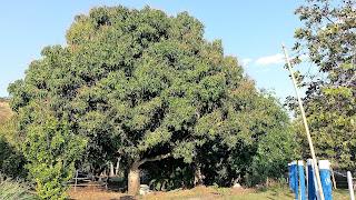mangueira - Camping Canarinho