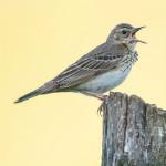 Torsten und die Vogelfotografie