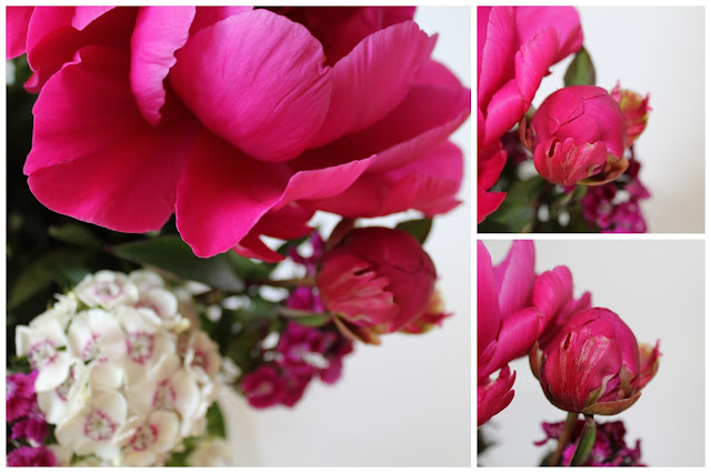 peonies and pink