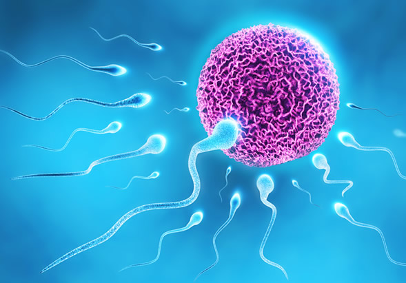 Factors responsible for low sperm count