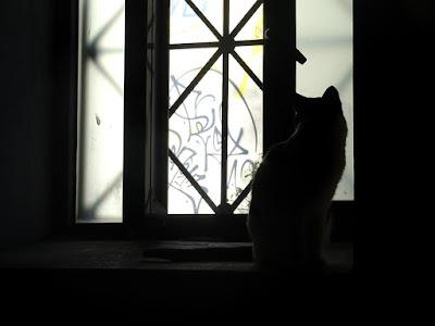 Μια γάτα στο κέντρο της Αθήνας...