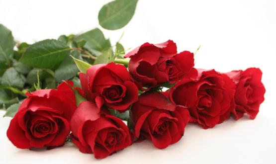 Tinh dầu Hoa Hồng nguyên chất chiết xuất 100% từ cánh hoa Hồng tự nhiên.