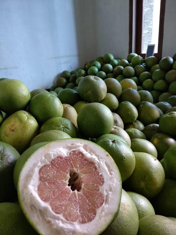 Tanam jeruk dapet untung | Jeruk pamelo dijual dengan harga 30.000/kilo