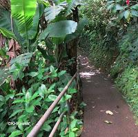 Wahi'awa Botanical Garden, Oahu, Hawaii
