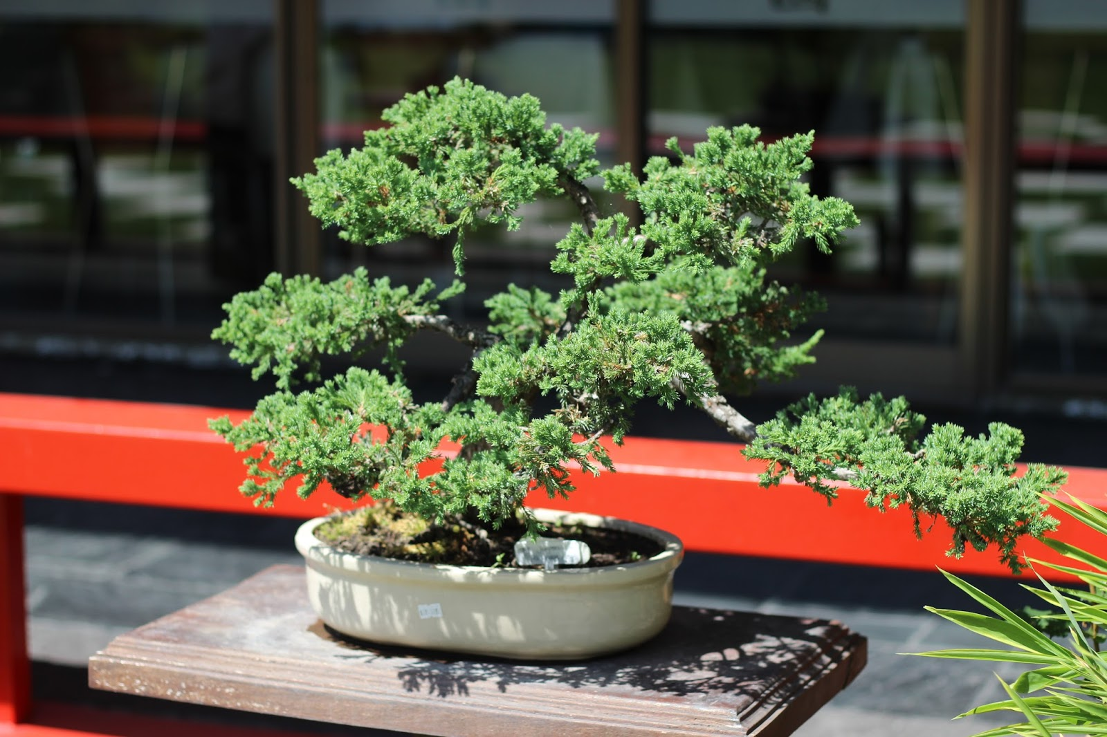 donde comprar un bonsai caba