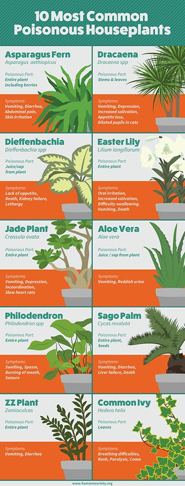 Diagram of 10 common poisonous houseplants