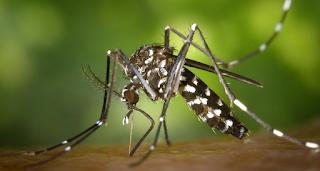 cara mengatasi chikungunya