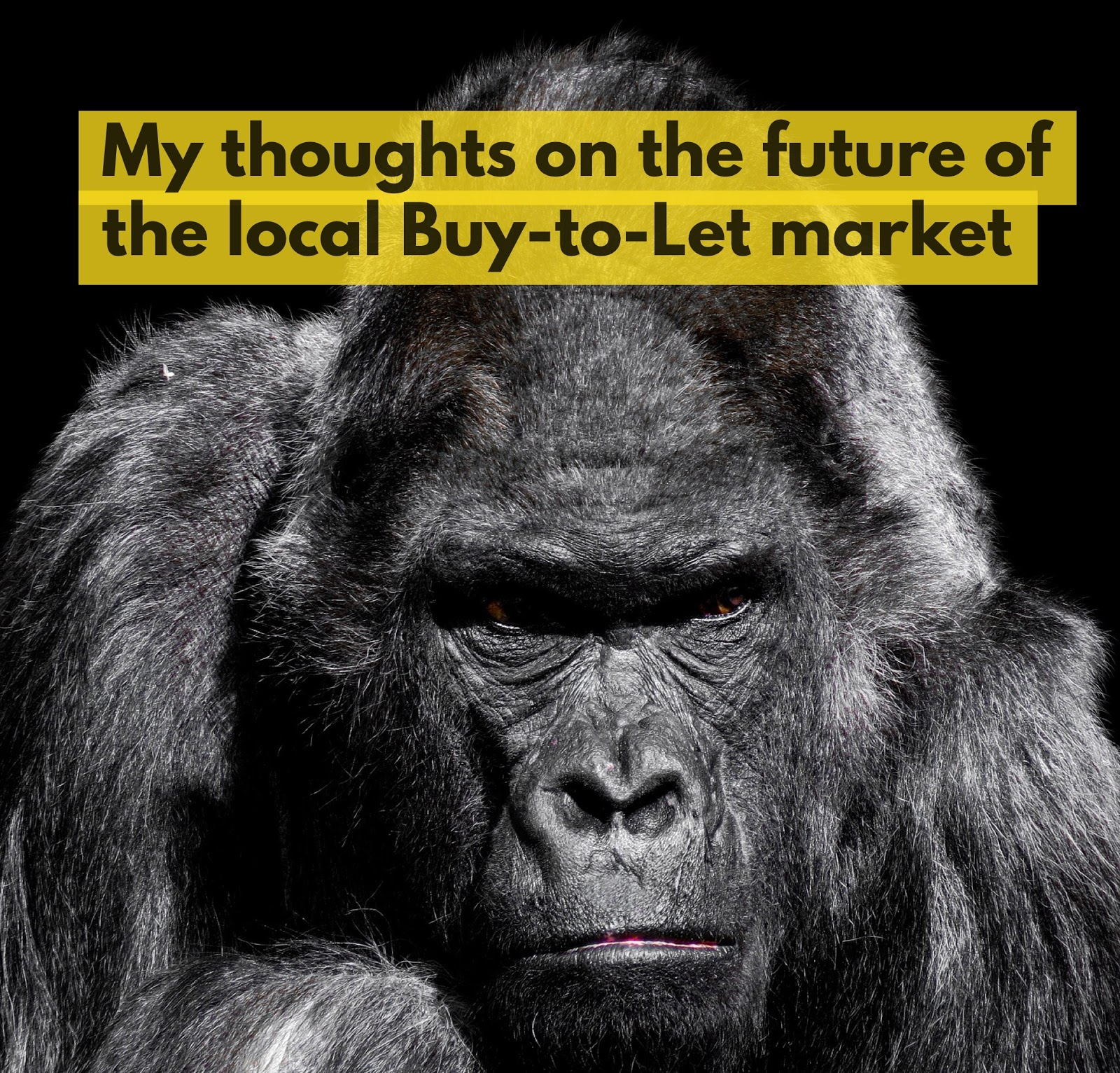 Warrington Property Blog: My thoughts on the future of the
