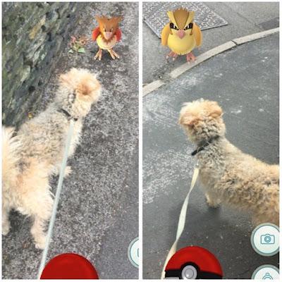 PokemonGo-para-pasear-a-los-perros-de-un-refugio