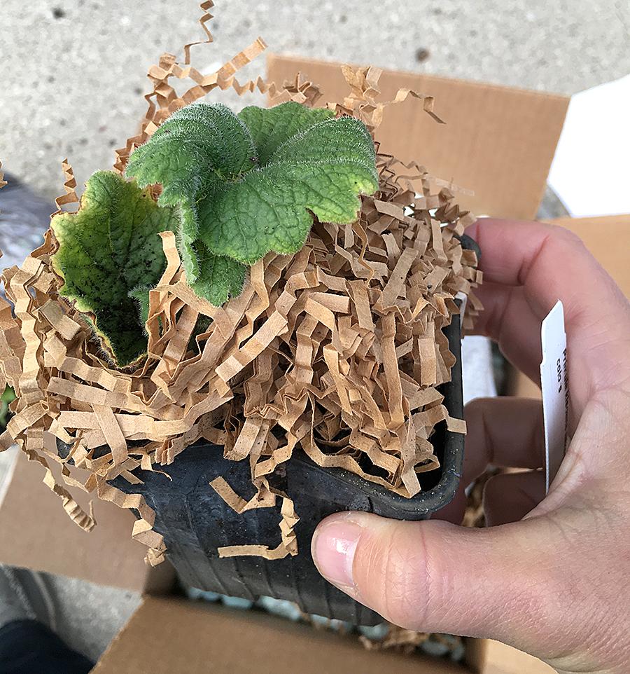 Mail Order Plants Review Arrowhead Alpines The Impatient Gardener