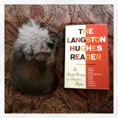 Murchie lays on his red comforter with a small hardcover copy of The Langston Hughes Reader beside him. Murchie is curled up so he's roughly the same length as the book. Its cover is half white, half red, with the title in block letters.