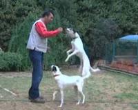 Para Kazandıran İş Fikirleri Oyuncu Köpek Eğitmenliği