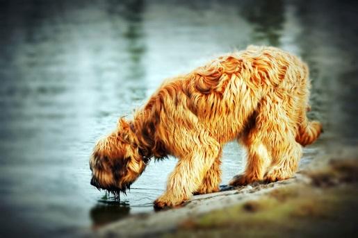 Jak zachęcić psa do pływania