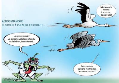 Cigognes à Cheverny y- Dessin Jean-Pierre Terrien