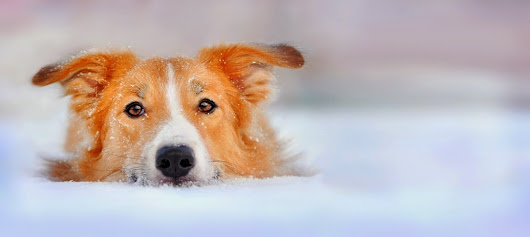 Bark Out Loud: 7 Ways to Protect Your Dog in Cold Weather