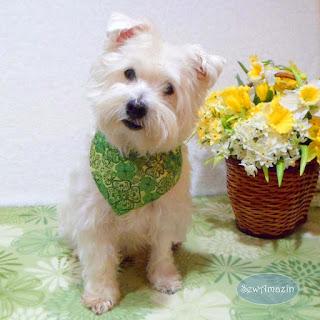 Classy Clover St Patricks Day Dog Bandana