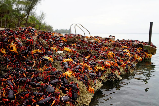 crabi-cuba-plaja